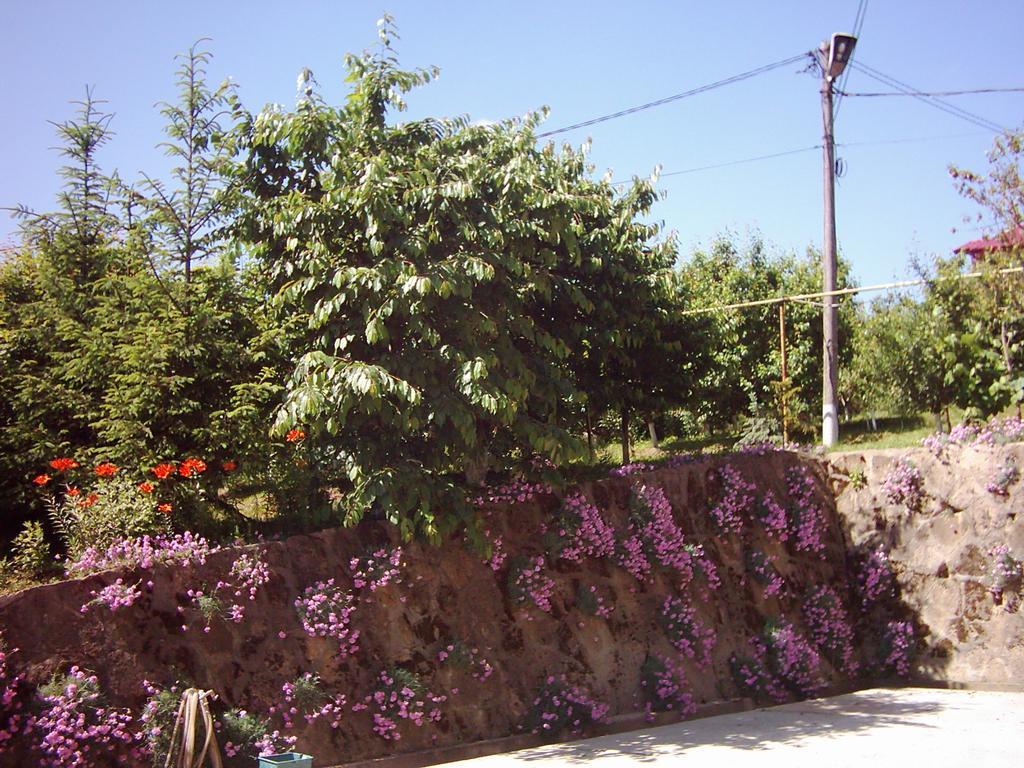 Garofita