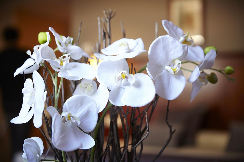 Golden Tulip Andorra Fenix