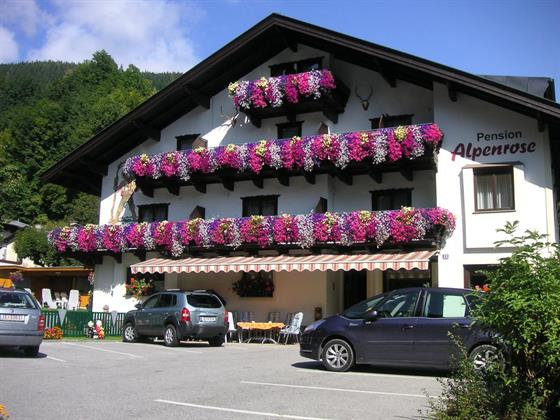 Alpenrose Ion (Zell Am See)